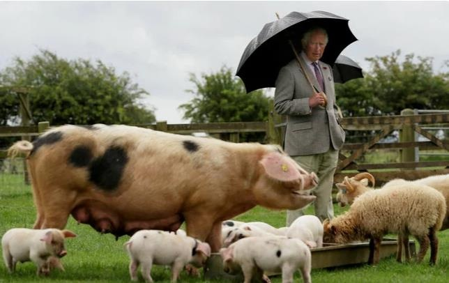 Британский принц Чарльз отказался от своей любимой фермы