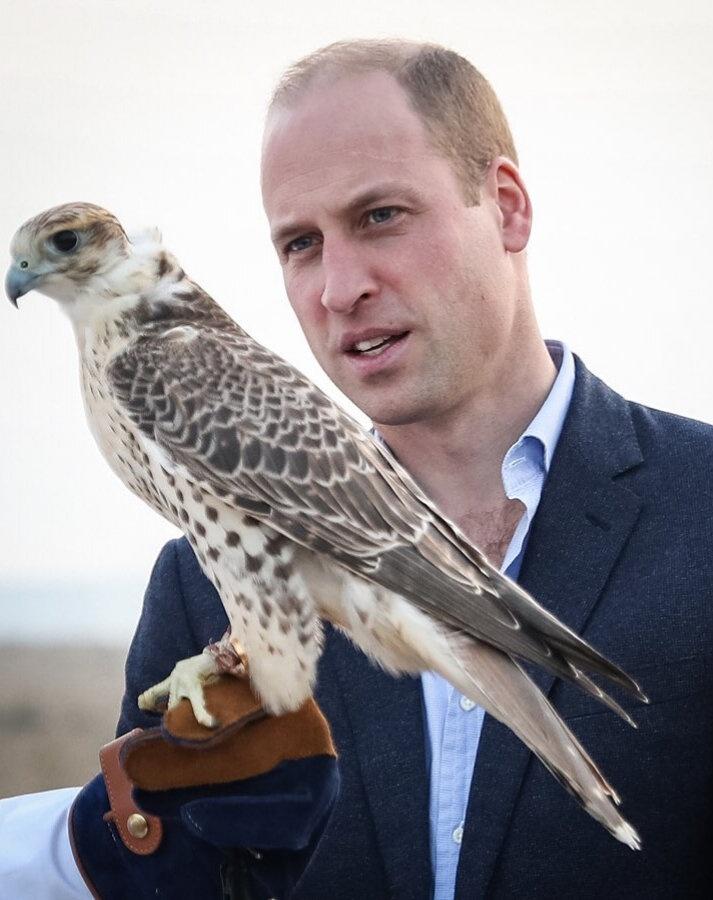 Принц Уильям отлично справляется один, в туре по Кувейту, пишет газета Зеркало