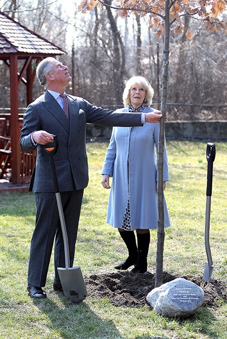 Принц Чарльз проводит оригинальный ритуал каждый раз, когда сажает новое дерево